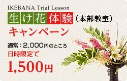 生け花体験キャンペーン(本部教室)