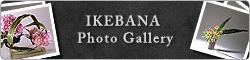 Ikebana Gallery